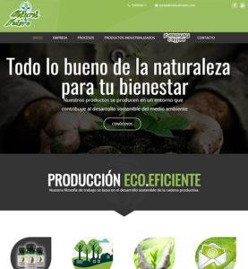 paginas web para negocios desarrollo diseño web profesional paginas web